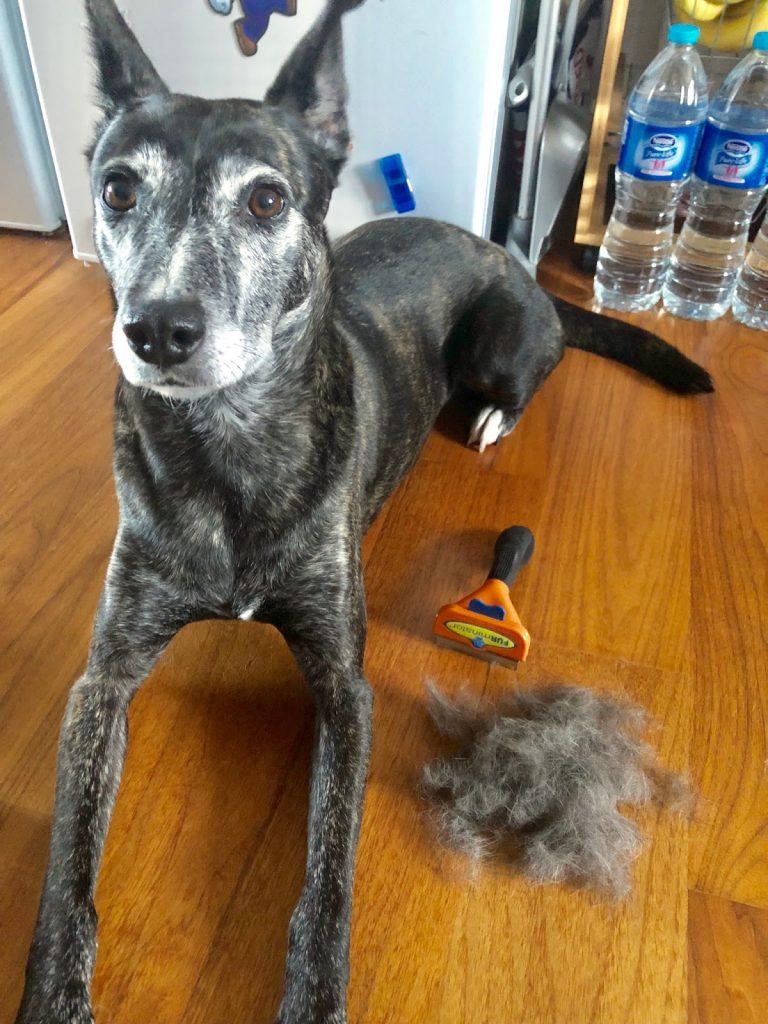 FURminator dog brush pet fur review